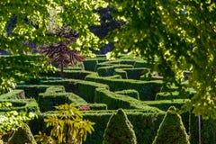 Un laberinto verde de arbustos en el parque del ` s de la ciudad botánico Fotografía de archivo