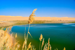 Un lac au milieu du désert photographie stock libre de droits