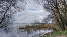 Un lac avec des roseaux et des arbres photos stock