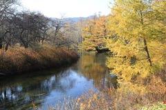Un lac dans la forêt photographie stock libre de droits