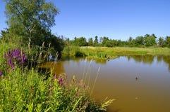 Un lac dans une réserve d'oiseaux migratrice Images libres de droits