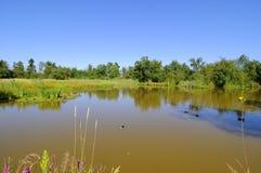 Un lac dans une réserve d'oiseaux migratrice Photos libres de droits