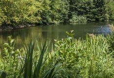 Un lac, jardins de Kew, Londres photos libres de droits