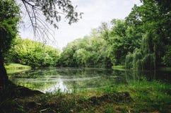 Un lac parmi les arbres Bel horizontal d'été images stock