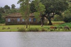 Un lac, peu d'animaux et une maison Image libre de droits
