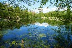 Un lac vu par des branches d'arbre photo libre de droits