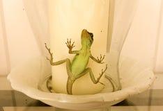 Un lagarto atrapado en una sombra de cristal de la vela Fotografía de archivo