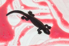 un lagarto negro en un fondo blanco y rosado fotos de archivo