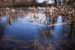 Un lago Fotos de archivo libres de regalías