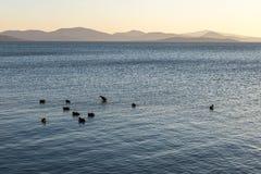 Un lago al tramonto, con alcune anatre sull'acqua blu e distante Fotografia Stock