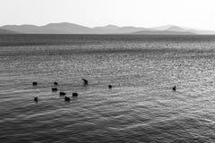 Un lago al tramonto, con alcune anatre sull'acqua e sulle colline distanti Immagini Stock Libere da Diritti