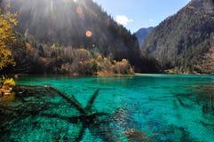Un lago azul y fósiles de los árboles en el lago Sustancia mineral Imagen de archivo libre de regalías