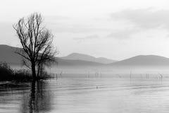 Un lago con un albero che riflette sull'acqua fotografia stock