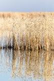 Un lago con le canne all'alba in autunno Fotografia Stock Libera da Diritti