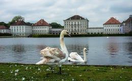Un lago con los cisnes en el palacio de Nymphenburg, Alemania fotografía de archivo libre de regalías