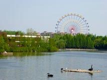 Un lago con un fondo de la noria en el parque animal salvaje de Shangai Imagen de archivo libre de regalías