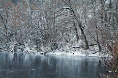 Un lago congelato della foresta Fotografie Stock Libere da Diritti