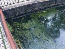 Un lago contaminado foto de archivo libre de regalías