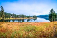 Un lago cristallino molto piccolo nella foresta del parco nazionale di Yellowstone, Wyoming immagini stock