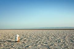 Un lago de sal seco en la África del Norte Imagenes de archivo