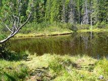 Un lago en un bosque fotos de archivo