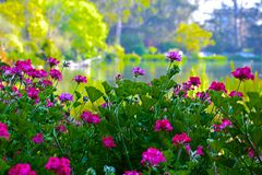Un lago floreale Immagine Stock
