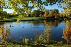 Un lago hermoso en el parque Imagenes de archivo