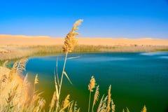 Un lago in mezzo al deserto Fotografia Stock Libera da Diritti