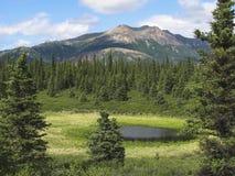 Un lago minuscolo Fotografia Stock Libera da Diritti