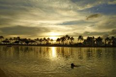 Un lago para se relajan y los árboles de coco en la puesta del sol en Hawaii Imágenes de archivo libres de regalías