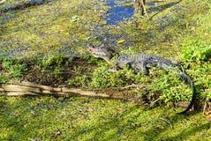 Un lago a Tampa Immagini Stock Libere da Diritti