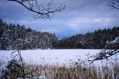 Un lago in una foresta durante l'inverno in Scandinavia immagine stock libera da diritti