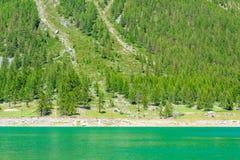un lago verde indicativo della montagna lungo un pendio coperto di alberi di pini Fotografia Stock
