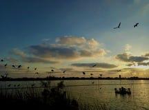 Un lago y pájaros en un cable fotos de archivo