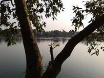 Un lago y un árbol Fotos de archivo libres de regalías