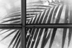 Un Lair diabolico dei botanici immagini stock