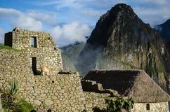 Un lama in rovine di Machu Picchu fotografia stock libera da diritti