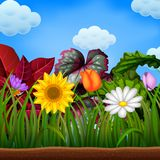 Un landspace awasome con il grande girasole e la camomilla fioriscono royalty illustrazione gratis