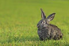 Un lapin image libre de droits