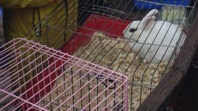 Un lapin blanc se repose dans une cage Zoo de contact Les gens observent les animaux domestiques à la foire banque de vidéos