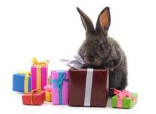 Un lapin brun avec des cadeaux photos libres de droits
