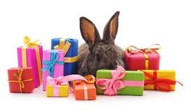 Un lapin brun avec des cadeaux image stock