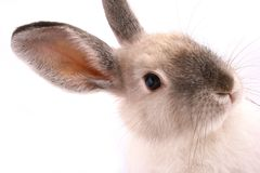 Un lapin d'isolement Images stock