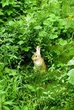 Un lapin dans l'herbe, Alice au pays des merveilles Photographie stock libre de droits
