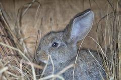 Un lapin gris mignon Image stock