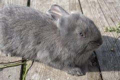 Un lapin gris mignon Images stock