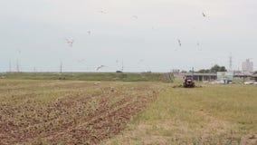 Un lato e una vista posteriore di un trattore agricolo, arando un campo per la semina, destra di giro Agricoltura, i raccolti archivi video