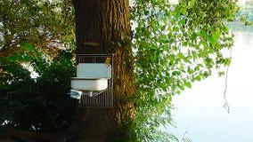 Un lavabo sur un arbre images stock