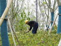 Un lavoratore agricolo che si china per coltivare i fiori fotografia stock