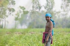 Un lavoratore del bambino allo sguardo nel campo della piantagione della patata in Thakurgong, Bangladesh Fotografie Stock